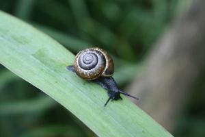 Beautifull snail by VlinderButterfly