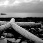 starfish... by marcodiquattro