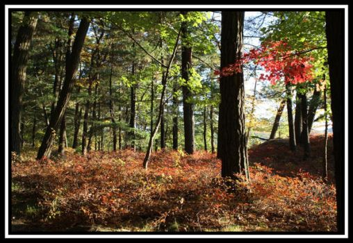 Fall Colors In The Woods by stevicus82