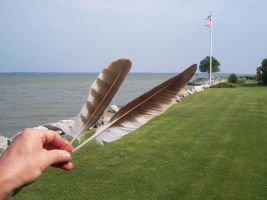 'A Pair of Osprey feathers' by SBricker