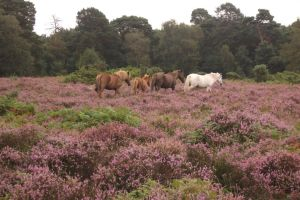 Wild Horses on the Moors by feainne-stock