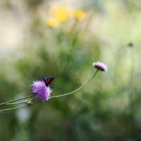 Small Life II by Quenia
