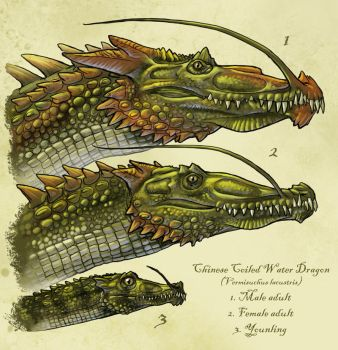 Chinese coiled dragon, Panlong by Onikaizer