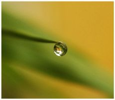 dewdrop by dustut