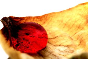 Drop on a rose petal by NumericArt