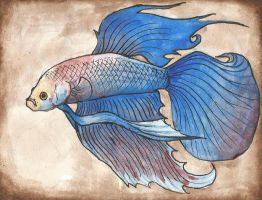 blue-white betta by LabradoriteEyes