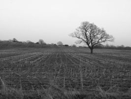 The field by elliemoo