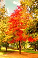 autumn colors V by glad2626