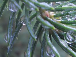raindrops on pines by HeartinStone