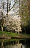 Spring in Gladbeck II by NorthernLand