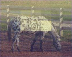 appaloosa by renderedsublime