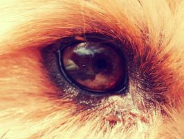 The Eye of a Dog is the Eye of the Warrior by misshoneywoo