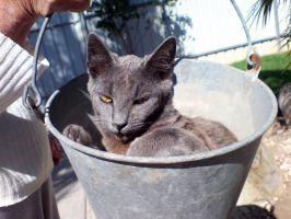 There appears to be a cat in your bucket by N-ScapePhotography