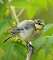 unknown bird by svenart