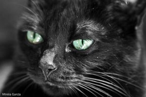 Green eyes by trencapins