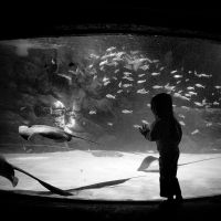Aquarium 02 by Hengki24