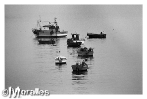 Pesca by Moralles