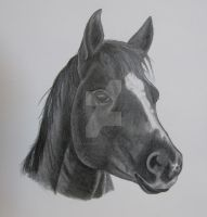 horse in progress by FlyingFancy1