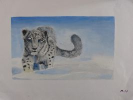 Snow Leopard by Mau-Ve