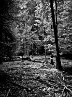 dark forest I by Jotpeh