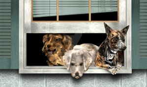 Three Stooges Dogs - Fractal by rockgem