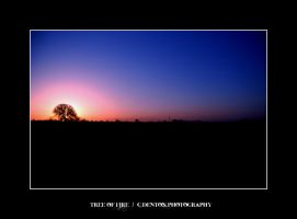 .023 - Tree of Fire by C-Denton-Photography