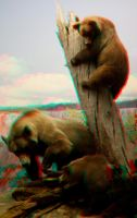 Stereoscopic Bears by dvreflex