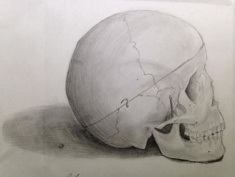 Skull by lilchyeah