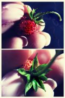 wild strawberries by LilySea