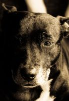 Antique Dog by FamousFi