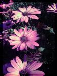 Paper flowers II by Gumi-Nacht
