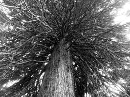 Mammoth Tree by sDoost