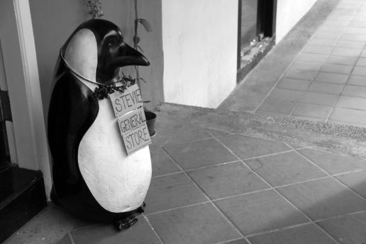 Mr. Penguin, the Store Owner by lolipopsical
