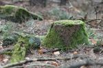Palatinate forest Stock 79 by Malleni-Stock
