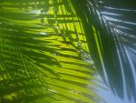 Leafy Palms! by LadyAquatica