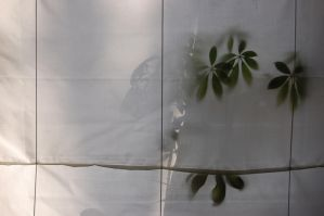 my lovely plant that is dying by mnphoto