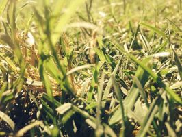 Grass by poeter14