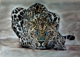 34. Leopard by Mrfour1