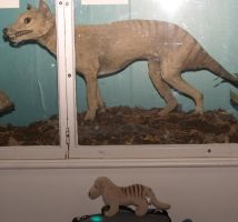 Scottish Thylacine and Plush by t-subgenius