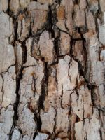Tree Bark by kizistock