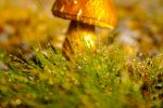 Mushroom 2 by OurArtUnleashed