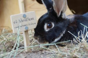 No admittance except on rabbit business by CLHarley