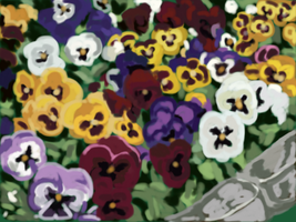 Pansies along the path by Be-Lyle
