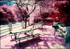 Infrared Picnic by reydoo