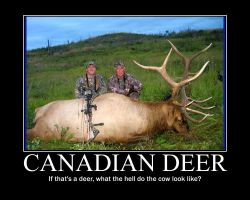 Canadian Deer Demotivational by quietlyintheshadows