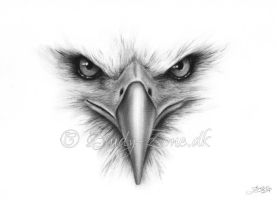 Face Of An Eagle by Zindy