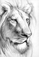 lion by ajkrunch123