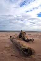 Driftwood on the Beach by kirstylegg