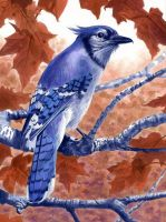 Blue Jay by Alanpaints