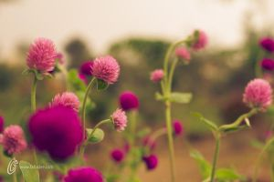 pink purple green by fahadee
